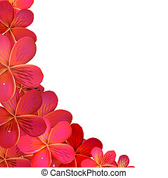 Frangipani Frame With Water Drops, Vector Illustration