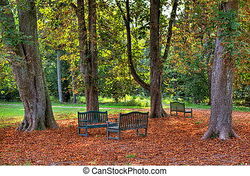 Three benches in the autumnal park. - Three benches under...