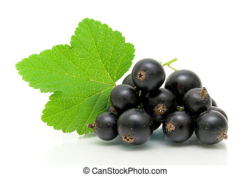 black currant and green leaves on a white background - fresh...