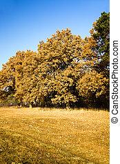 oak autumn