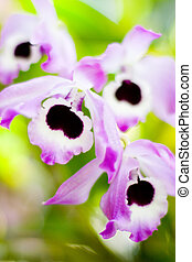 Black spotted flowers with white and purple accents