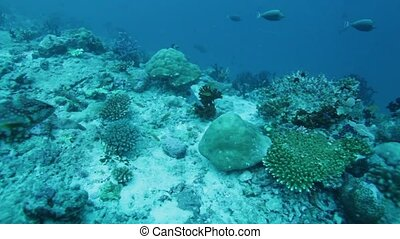 Colorful Grouper and Tropical Reef