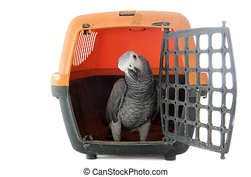 African Grey Parrot in kennel - African Grey Parrot...