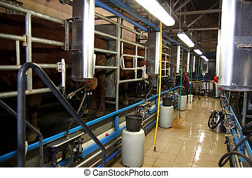 Milking Cows on farm - Cows in milking machine on farm