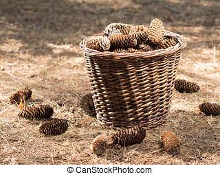 Autumn concept with pine cones - Autumn nature scene in pine...