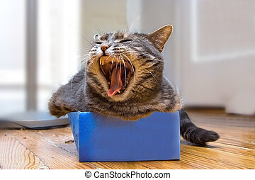 Cat in the box - A cat laying in a shoe box whil shes...