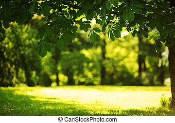 Spring Park -  Spring Park nature background