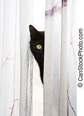Peeking cat - Black cat with bright green eyes peeks with...