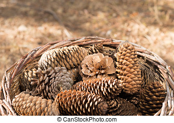Autumn background with pine cones - Autumn nature scene in...