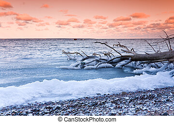 Fallen tree in sea at sunset