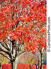 Red Leaves on a Tree During Fall