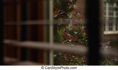 rain through the window - Looking through the blinds at a...