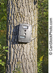 Black Trail Cam on Poplar Tree for Deer Hunting - Black...