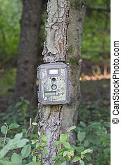 Camouflage Trail Cam on Pine Tree for Deer Hunting -...