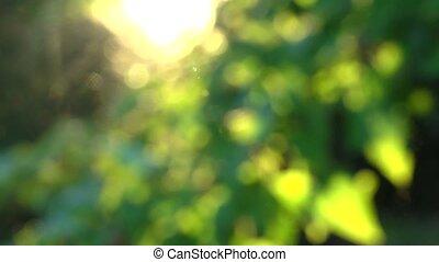 soft focused sunny tree