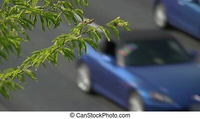 soft focused traffic - The shot is focused on some tree...