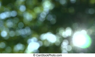 soft focused tree with sun