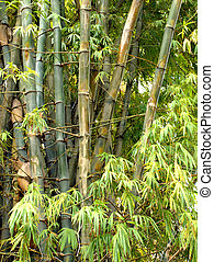 bamboo trees - Stems and leaves of bamboo tree forest