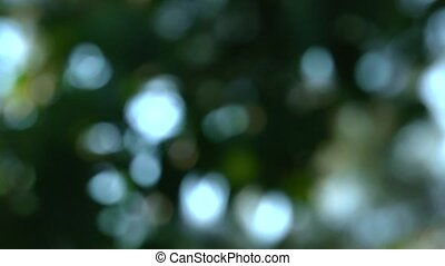 soft focused tree