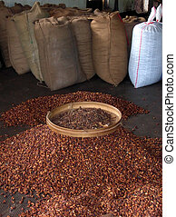 Cacao beans in bags - Cacao beans waiting for transport The...