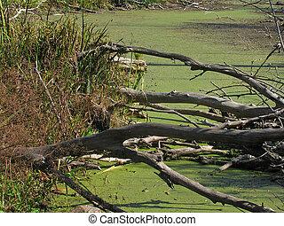 bog - dry logs on a bog