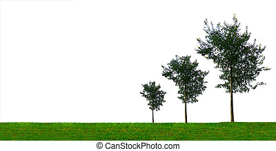 Growing Trees - Growth concept with three growing trees of...