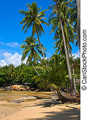 Tropical beach with exotic palm trees