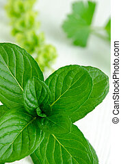 Close-up shot of fresh spearmint on white kitchen table -...