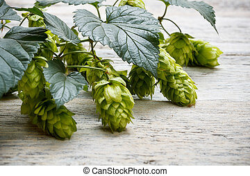 Green plant hops on old wood table