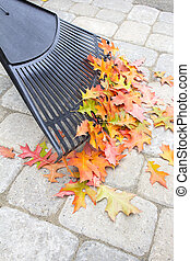 Raking Fallen Oak Leaves Vertical