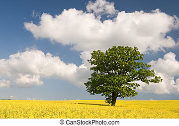 Rape with green tree - Green tree in yellow field of rape