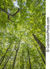 wide angle shot of tree canopy - Wide angle shot of tree...