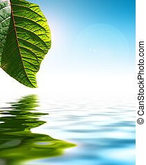 Leaf Over Water - Fresh Green Leaf Over Water Background