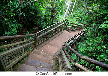 Path through Iguazu National Park