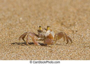 Crab on Sand - Crab on a beach at Kauai