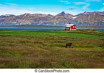 Iceland red house in the meadow with a horse, mountain...