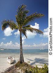 Caribbean Coast - Coco palm tree on tropical Caribbean shore