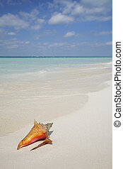 Life is a Beach (Conch) - One of a large series. Tropical...