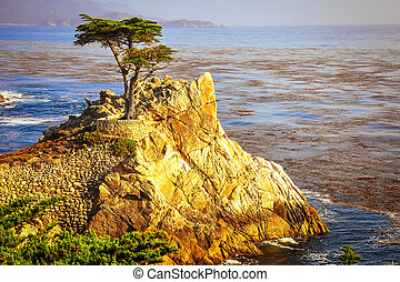 Lone cypress tree on the rock cliffs above ocean,...