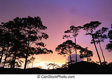Beautiful twilight sunset in rain forest, Thailand.