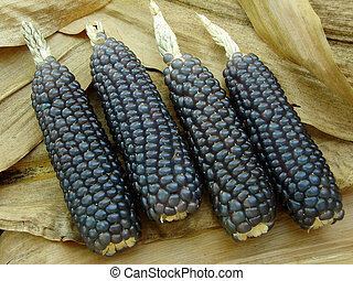 mini blue corn on dry leaves background...