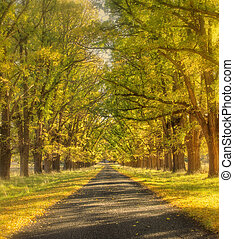 dreamy autumn road - soft and dreamy yellow tree lined road...