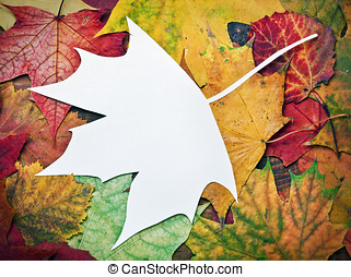 maple leaf cut out of paper with space for text