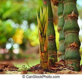 Bamboo shoots.