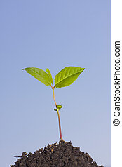 plant - green plant in a hand on sky background