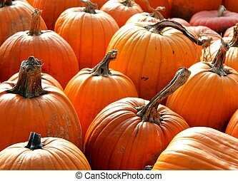 Selection of Pumpkins in patch