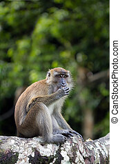 Monkey - Portrait of monkey munching peanut on tree