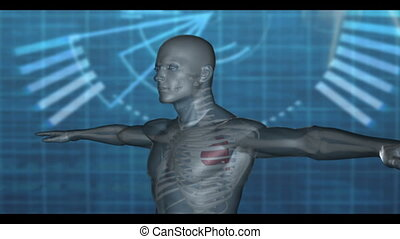 Medical video of revolving human - Computer-animated and...