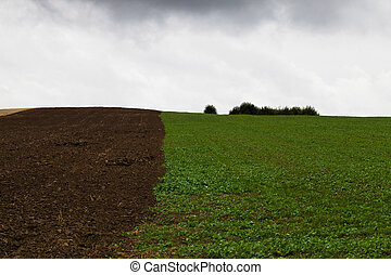 the plowed field