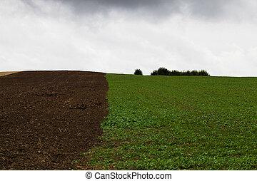 the plowed field
